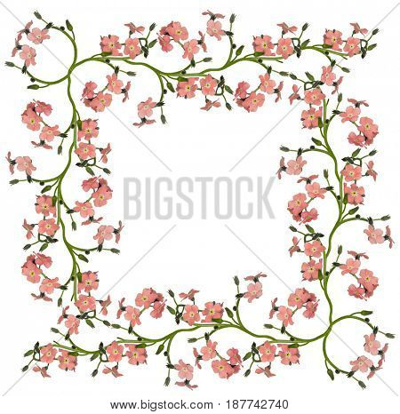 light red forget-me-not flowers frame isolated on white background