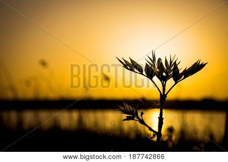 small tree twig on sunset sky background