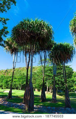 Green Fairway Landscape