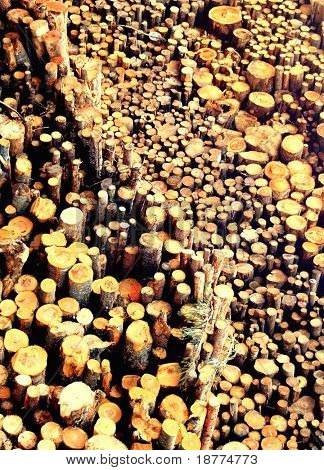 Sewed stumps of trees for combustion  in a biomass energy plant