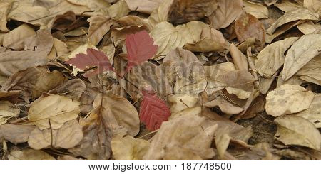 Colorful backround image of fallen autumn leaves perfect for seasonal use.