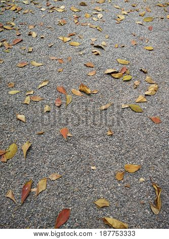 a lot of leaves on stone ground. wallpaper photo.