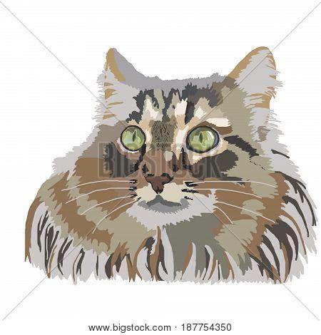 cat animal fluffy cats pet head kitten drawing isolated domestic animal pet cartoon sketch illustration