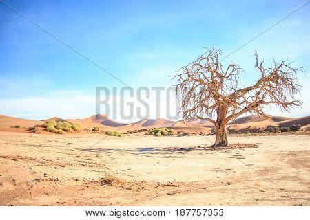 Dead Tree In The Sossusvlei Desert.