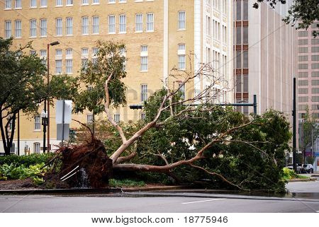 NEW ORLEANS - SEPT 1: A fallen tree lies on the ground after Hurricane Gustav on September 1, 2008 in downtown New Orleans.