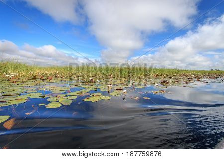 Picture Of The Landscape In The Okavango Delta.