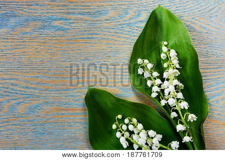 Lily of the valley flowers on wooden background