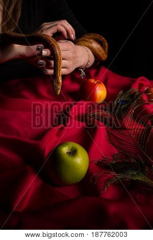 The Snake Leaned Over The Table With Apples And Stuck Out Her Tongue