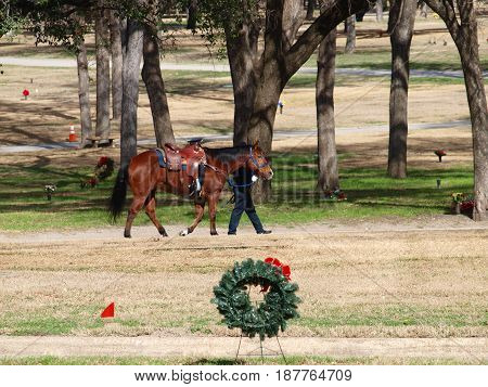 Riderless Horse with boots reversed in the stirrups and  a hat on the saddle horn is led by a  trainer through a cemetery in pre Memorial Day rehearsals.