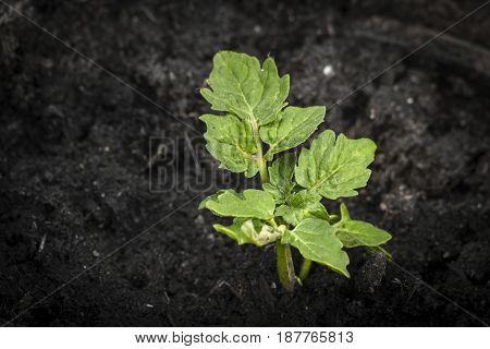 Green Plant Growing In Dark Soil