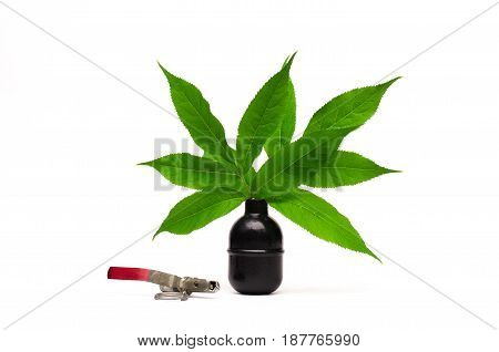 Vase made from hand grenade with green tree leaves as symbol of peace. Stop the wars concept.