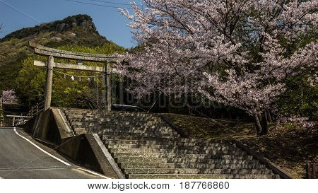 Blooming cherry blossom in Okayama Temple, Japan Beautiful spring landscapes of Japan