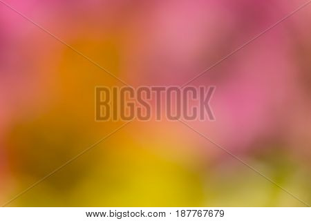 Defocused and blurred abstract colorful background of a field of colorful tulips
