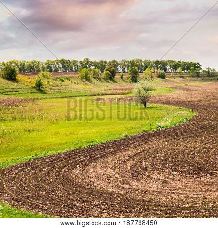 Beautiful spring Ukrainian landscape with a curved arch field and fresh juicy green grass. Sprouted sprouts. Planting of wheat. The agrarian industry.