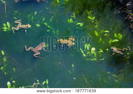 Animal World, Frogs In Swamp, Looking Around