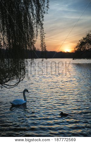 Beautiful Vibrant Spring Sunrise Over Calm Lake In English Countryside