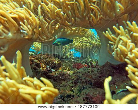 Thriving  Coral Reef Alive With Marine Life And Shoals Of Fish, Bali.