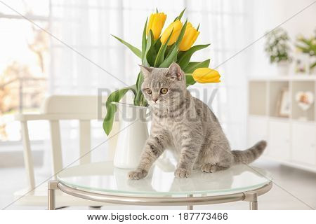 Cute cat and jug with flowers on glass table in light room