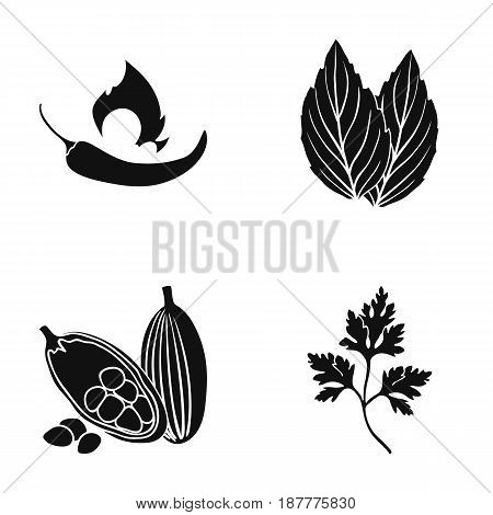 Chili, basil, cocoa beans, parsley.Herbs and spices set collection icons in black style vector symbol stock illustration .