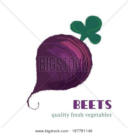 Fresh beets isolated on white background. Healthy food for the design of menu. Hand-drawn color vegetable design. Vector illustration.