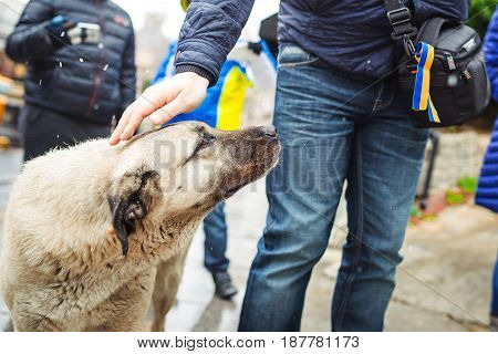 man's hand stroking a stray dog. Winter
