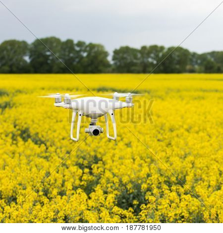 Copter soars from the ground to the sky against a background of beautiful bright yellow field with rapeseed. Surfing the fields on the copter. A drone with a high-resolution camera.