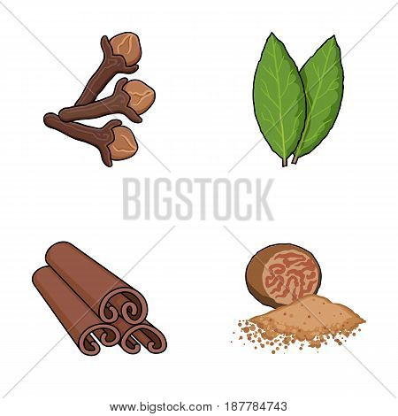 Clove, bay leaf, nutmeg, cinnamon.Herbs and spices set collection icons in cartoon style vector symbol stock illustration flat.