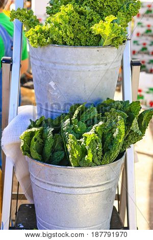 Punta Gorda, FL, USA - 01/16/2016: Romain lettuce in a tin bucket at the farmers market in Punta Gorda FL