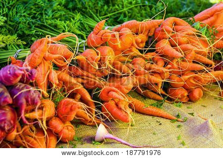 Punta Gorda, FL, USA - 01/16/2016: Organic carrots on sale at the farmers market in Punta Gorda FL