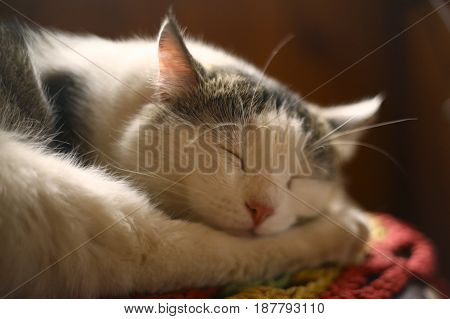 cat sleeping on wooden chair in country house interiour close up photo