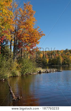 The beautiful fall colors of a northwoods forest made even more vibrant by the reflective waters of a wilderness lake.