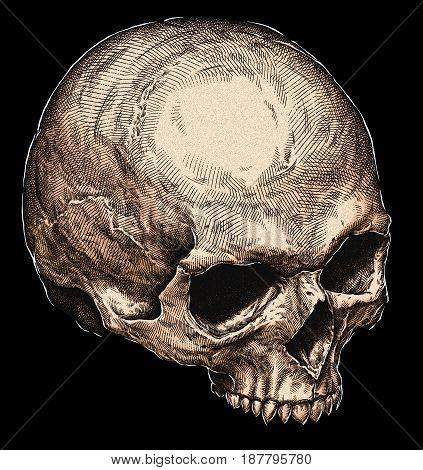 Engraved human skull hand drawn graphic illustration art
