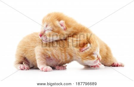 Two small kittens on a white background.