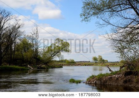 A tree above the river bend and the blue sky