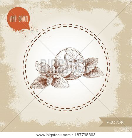 hand drawn sketch style healthy fruits. Lemon half and mint leafs. Eco fruit vector illustration. Healthy fruits and herbs.