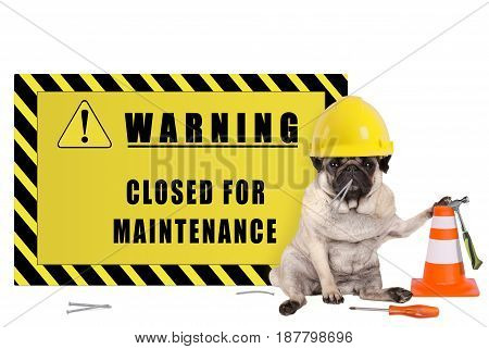pug dog with yellow constructor safety helmet and warning sign with text closed for maintenance isolated on white background