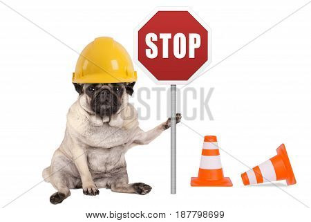 pug dog with yellow constructor safety helmet and red stop sign on pole isolated on white background