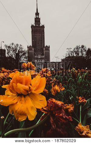 Yellow flower at the feet of Palace of Culture and Science in Warsaw