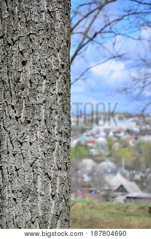 Close Up Shot Of The Bark From The Tree Trunk Against The Background Of A Blurred Rural Landscape Wi
