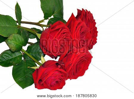 Red roses flowers bunch bouquet isolated on white wedding beauty card background decoration