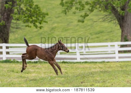 Foal Lands from Excited Jump in green field