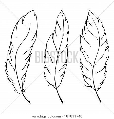 Monochrome black and white bird feather line art set vector