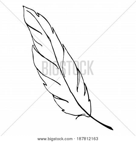 Monochrome black and white bird feather line art vector