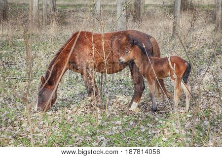 mother horse and young cold in the wilderness