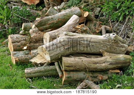 Log pile for wildlife habitat or as logs for fuel with grass and vegetation as background.