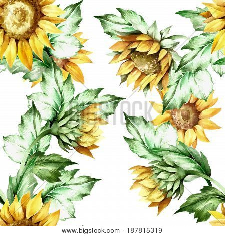 Seamless pattern with sunflower. Hand draw watercolor watercolor