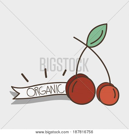 fresh cherry organ fruit with ribbon, vector illustration