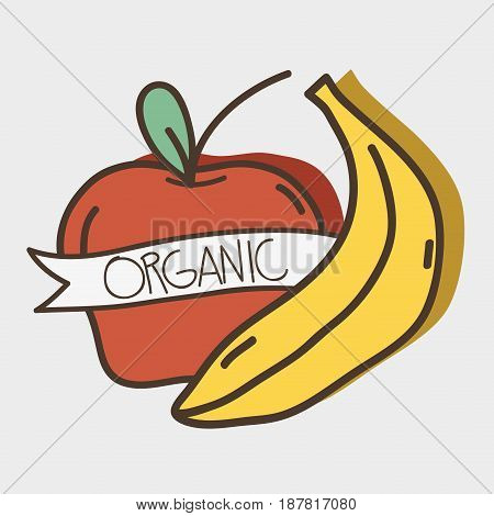 fresh apple and banana organ fruits with ribbon, vector illustration