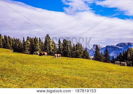 The  Dolomites - World Natural Heritage. Concept pedestrian and ecotourism. Fabulous quiet mountain valley