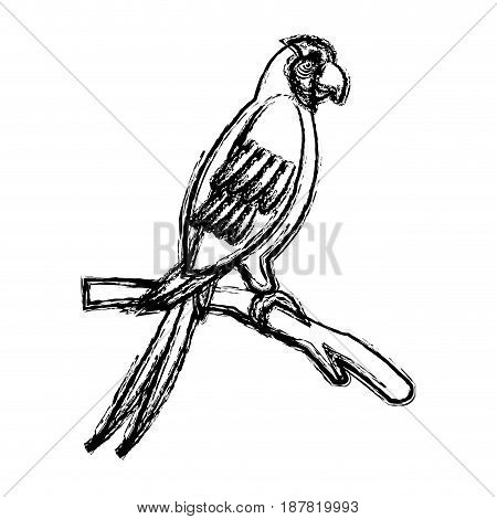 macaw amazon bird brazil wildlife image vector illustration